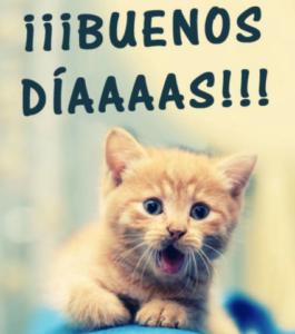 Buenos Días Imágenes Gratis Fotos Y Gifs Con Frases
