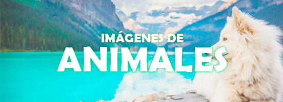 Imágenes de Animales