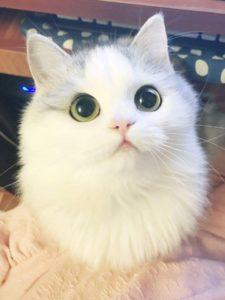 foto gato ojos tiernos