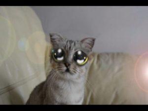 gato ojon