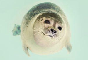 león marino muy tierno