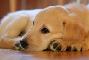 lindo perrito tierno