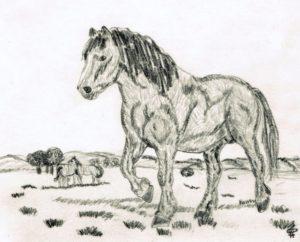 paisaje para dibujar con caballo