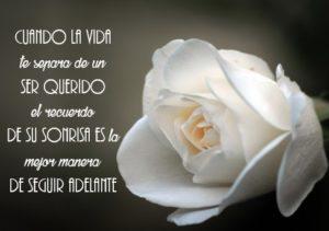 rosa blanca de luto