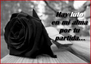 rosa negra de luto