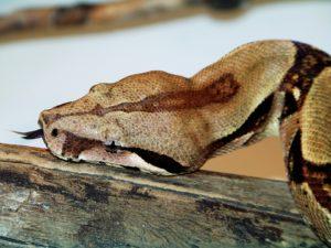 serpiente salvaje
