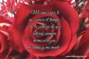cartel con rosa y frase bonita