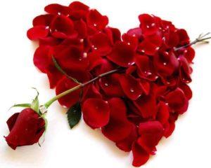 corazon de petalos atravezado por una rosa