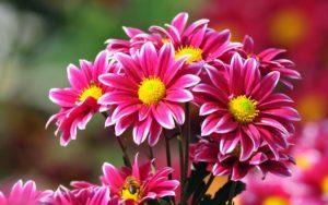 flores hd