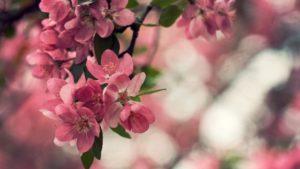 flores para portada