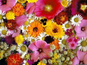 muchas flores