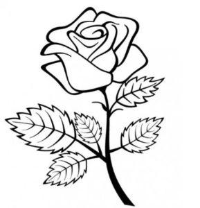 rosa con tallo para dibujar