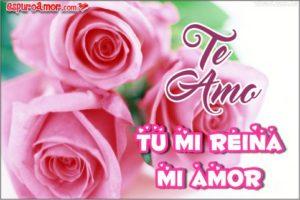 rosa de te amo mi reina